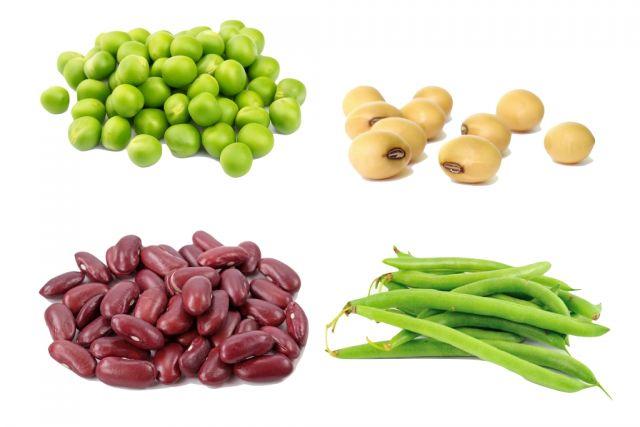 alimentos ficos em proteinas sem origem animal